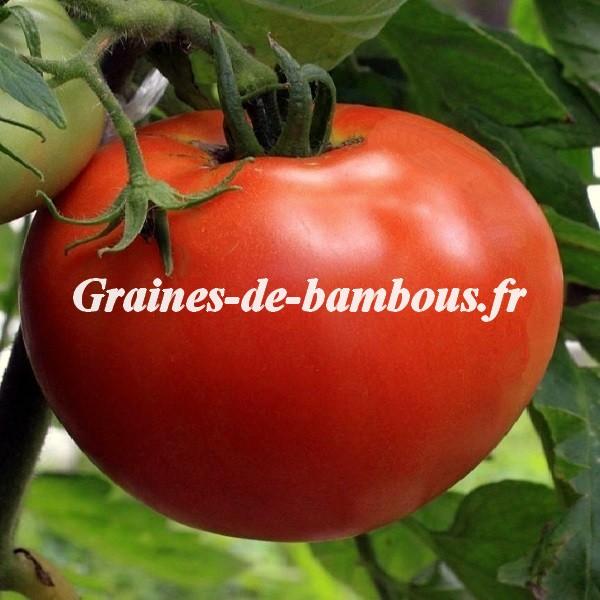 Tomate ace 55 grainesdebambous com
