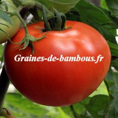 Tomate Ace 55 VF 1200 graines