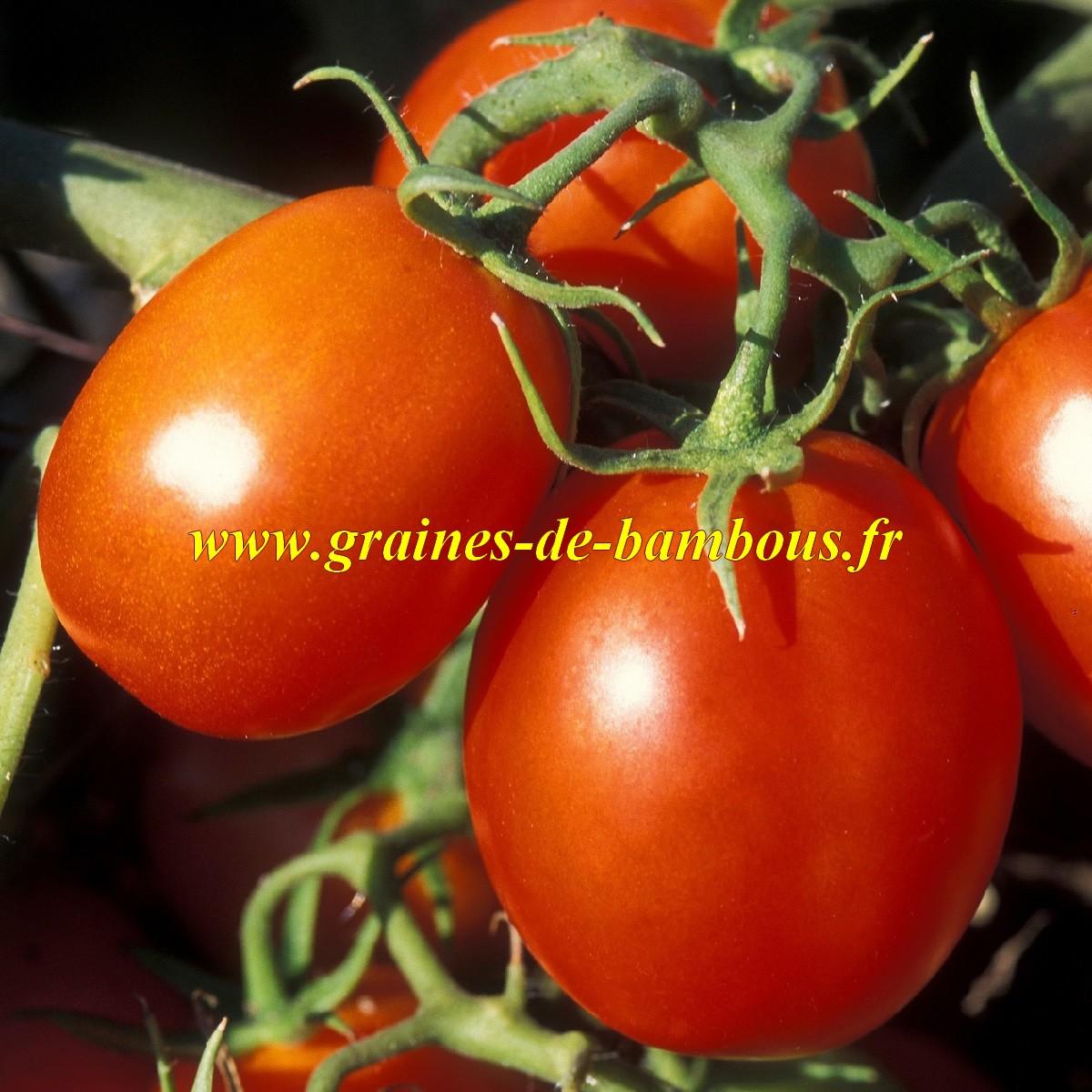 Tomate arbre de berao