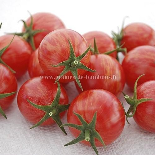 Tomate Artisan pink Bumble bee réf.776