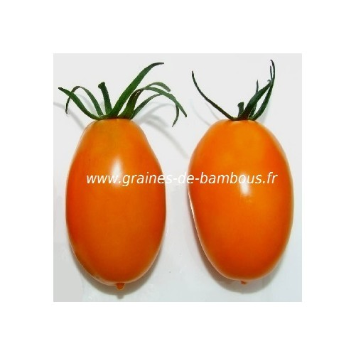 Tomate banana orange graines de bambous fr