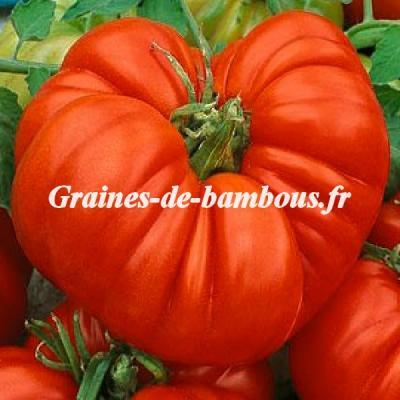 Tomate chair Boeuf Beefsteak 1000 graines