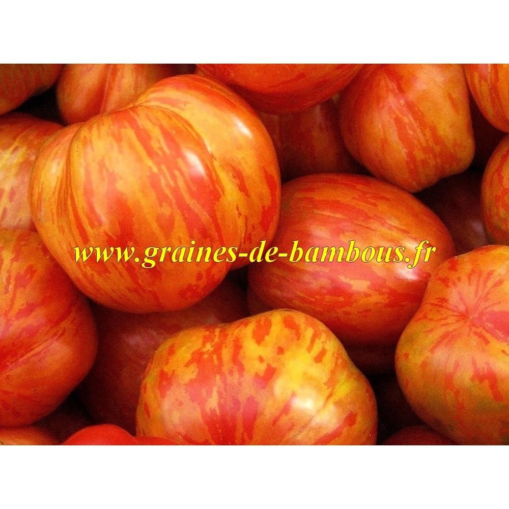 Tomate bicolore tigerella
