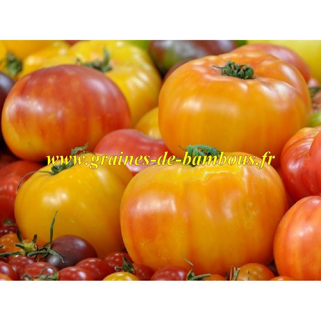 Tomate big rainbow graines de bambous fr