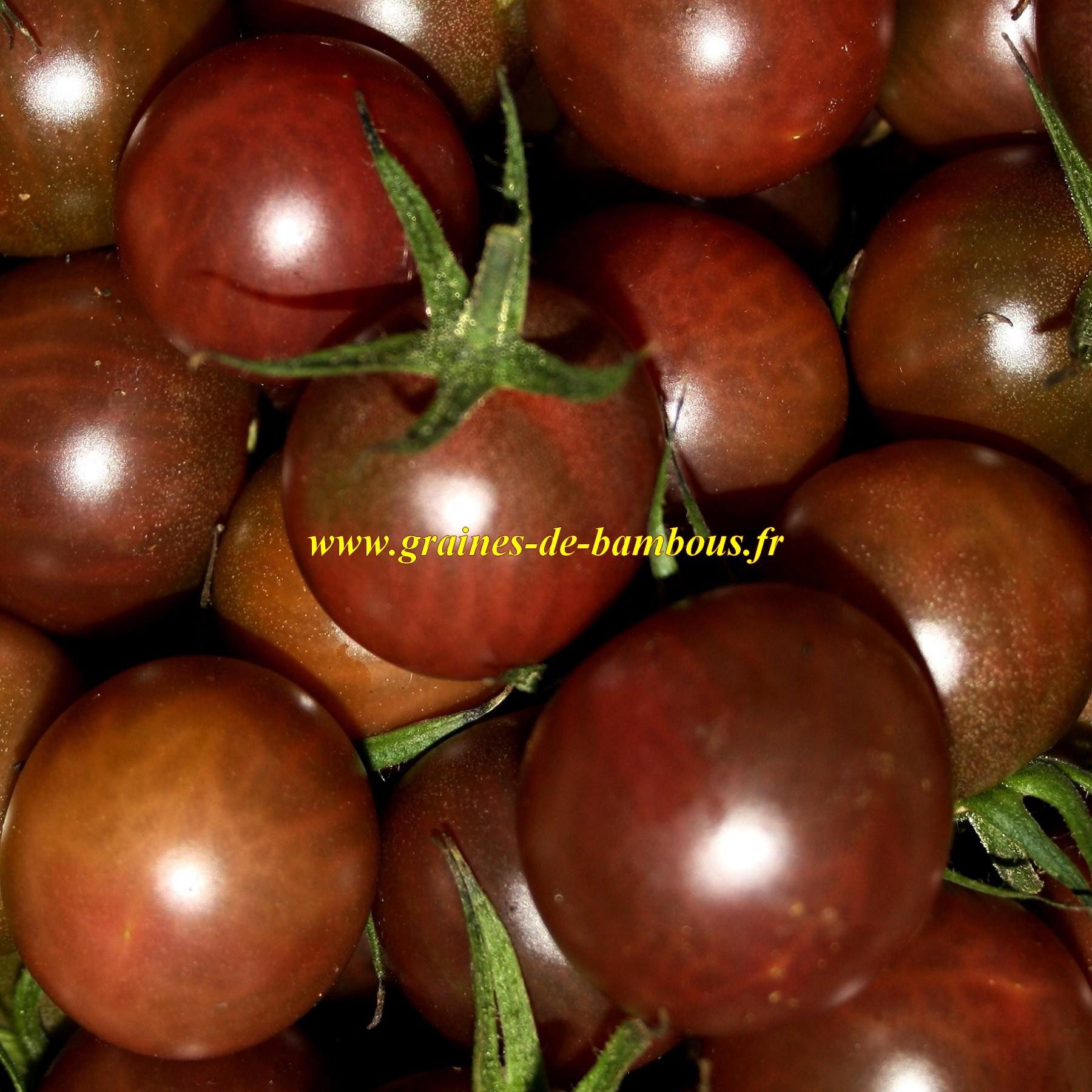 Tomate black cherry graines