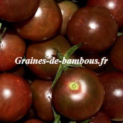 Tomate cerise noire Black cherry 1000 graines