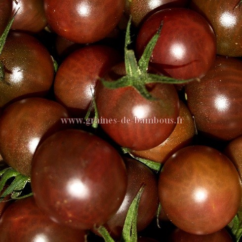 Tomate black cherry semences