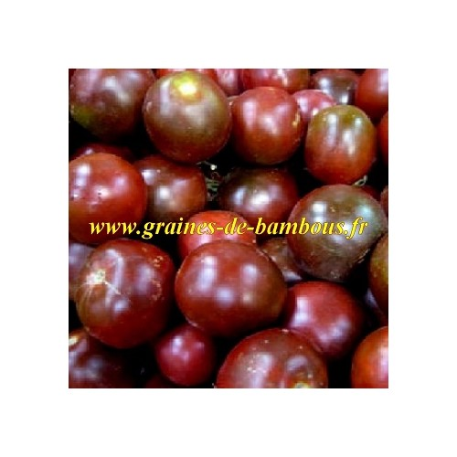 Tomate black prince graines seeds samen semillas lycopersicon esculentum