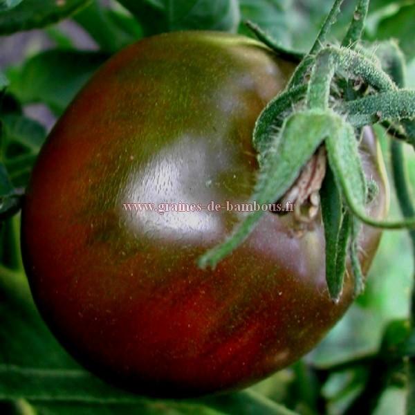 Tomate black prince noire graines de bambous fr