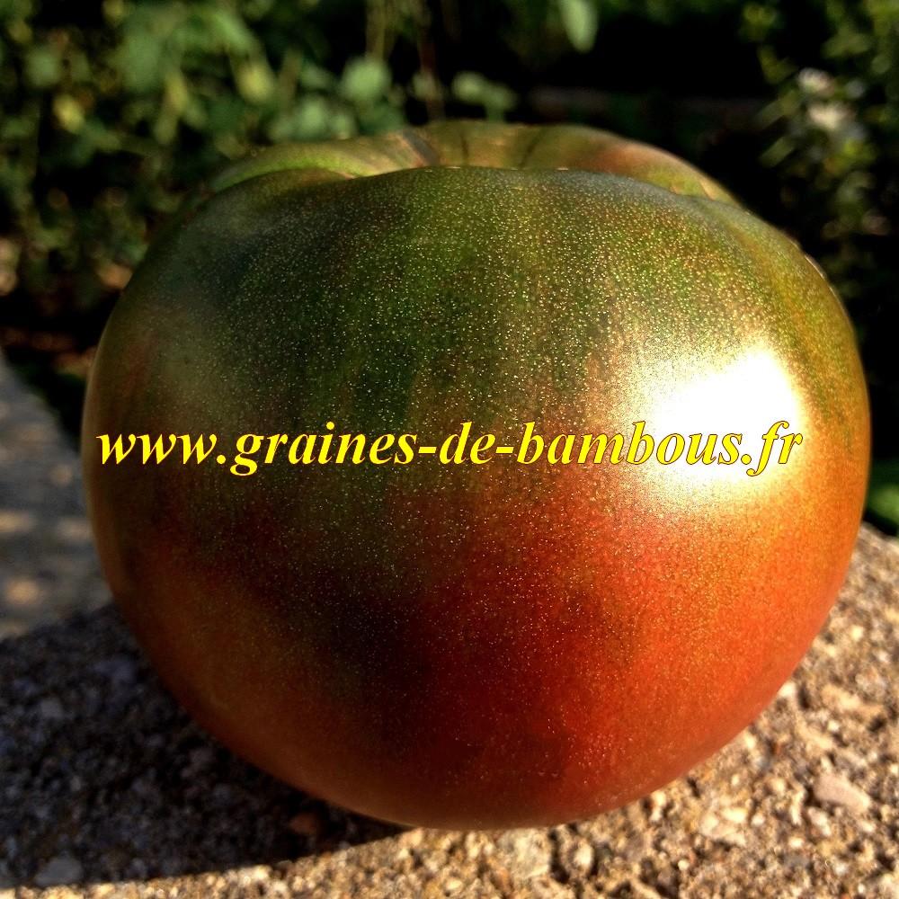 Tomate black seaman graines