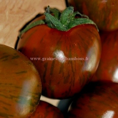 Tomate black zebra graines semences