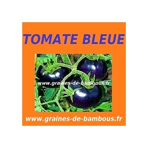 Tomate bleue osu blue indigo rose www grainesdebambous com