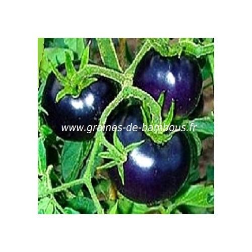 Tomate bleue p20 osu grainesdebambous com