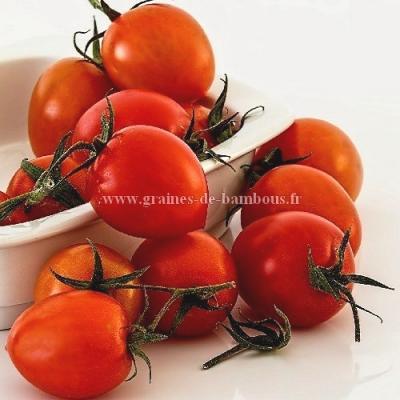 Tomate Principe Borghese réf.363
