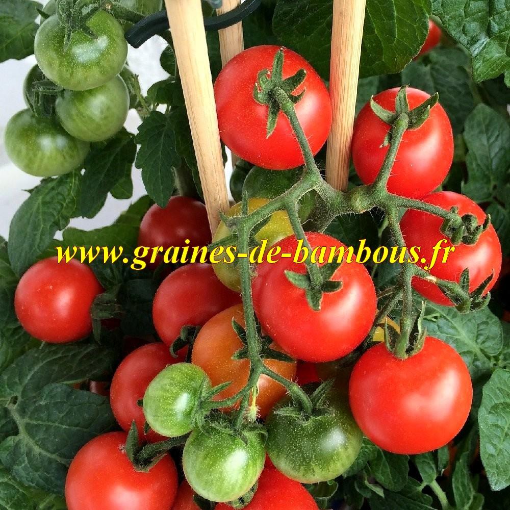 tomate cerise rotkappchen sur graines de. Black Bedroom Furniture Sets. Home Design Ideas