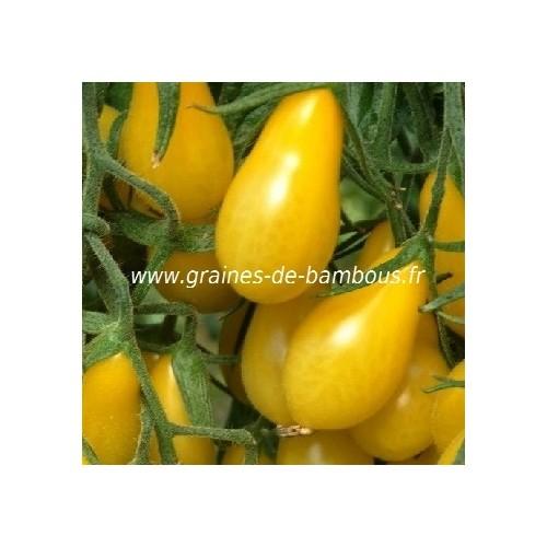 Tomate cerise poire jaune graines de bambous eu