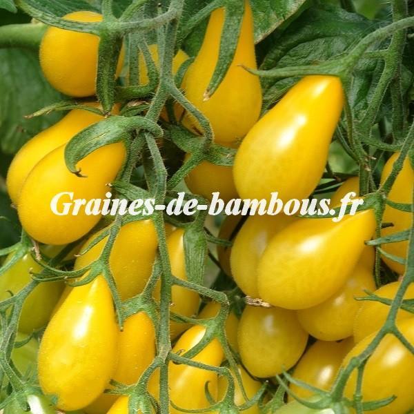 Tomate cerise poire jaune 1000 graines
