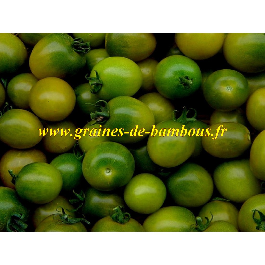 Tomate cerise verte green grape graines de bambous fr