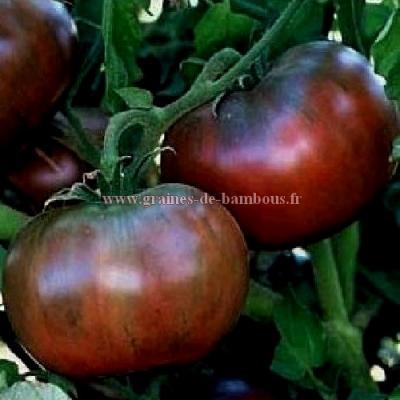 Tomate Cherokee purple réf.359