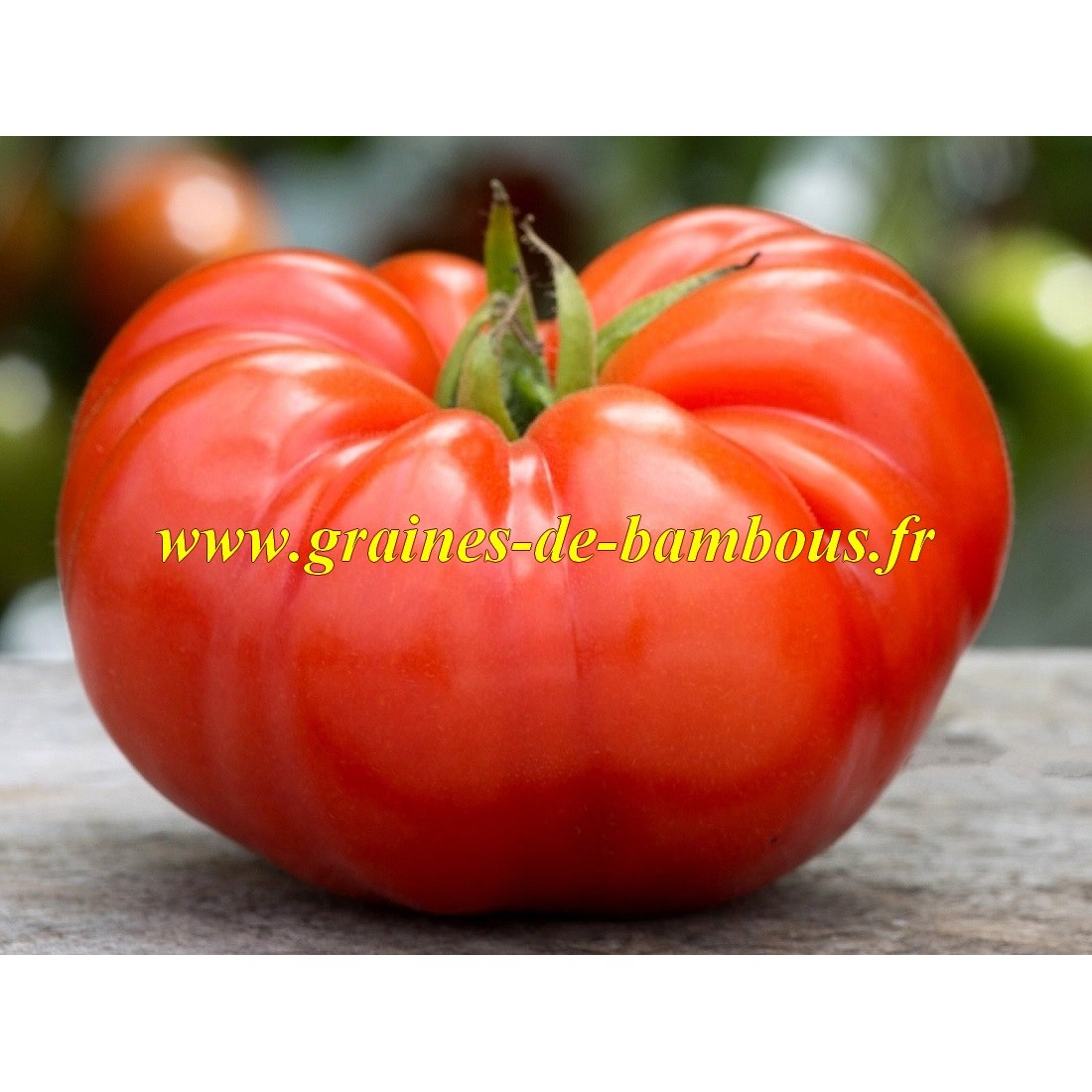 Tomate coeur de boeuf beefsteak graines
