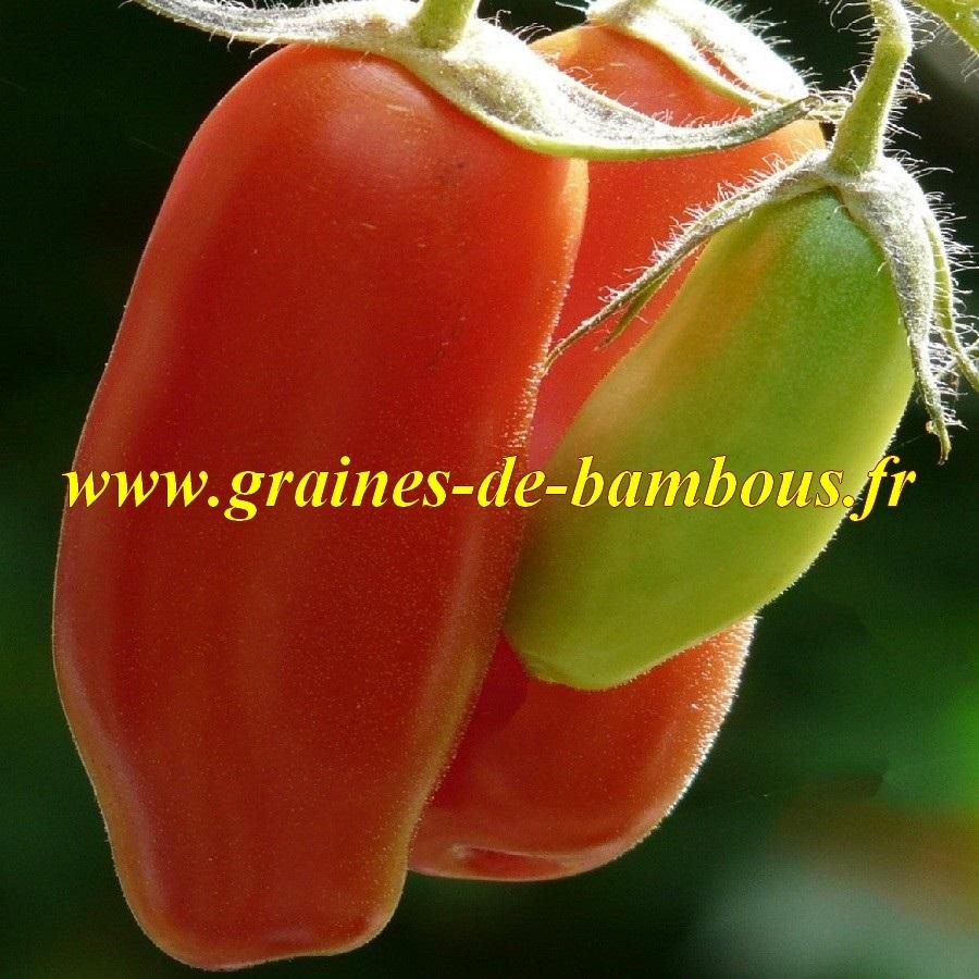 Tomate de san marzano