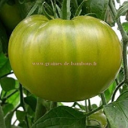 Tomate Evergreen réf.277