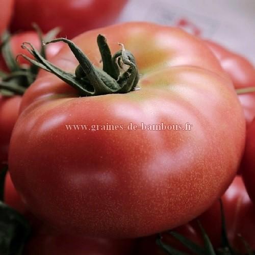 Tomate geante belge rose graines de bambous fr
