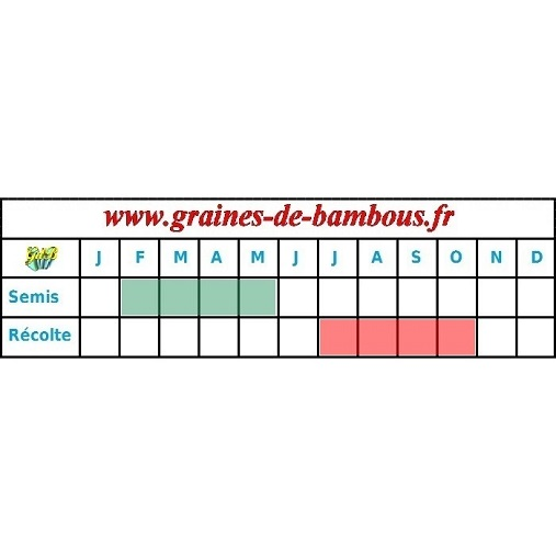 Tomate german johnson pink graines periode semis recolte