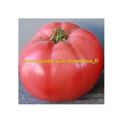 Tomate german johnson pink www graines de bambous fr lycopersicum esculentum