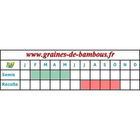 Tomate german red strawberry graines periode semis recolte seeds