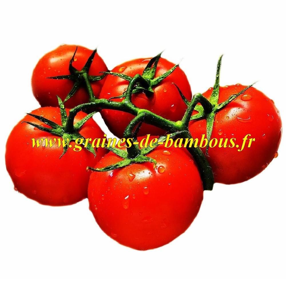 Tomate glacier graines jardin semis