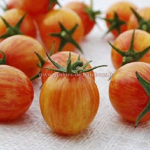 Tomate Artisan golden Bumble bee réf.777