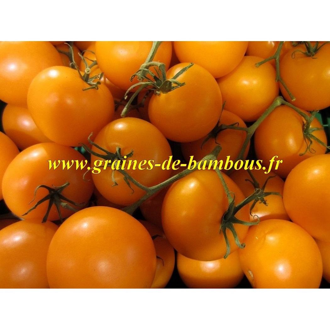 Tomate golden jubilee graines de bambous fr