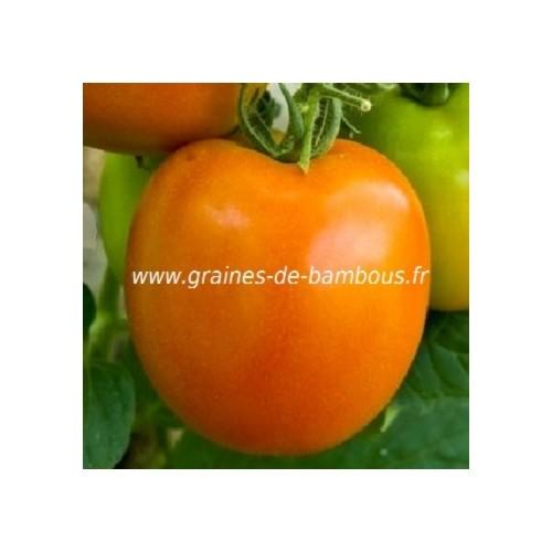 Tomate golden sunray sur graines de bambous fr