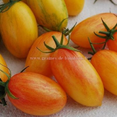 Tomate Artisan blush Tiger réf.781