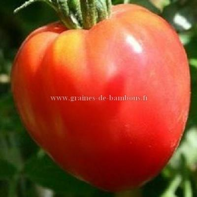 Tomate Coeur de Boeuf Rose réf.273
