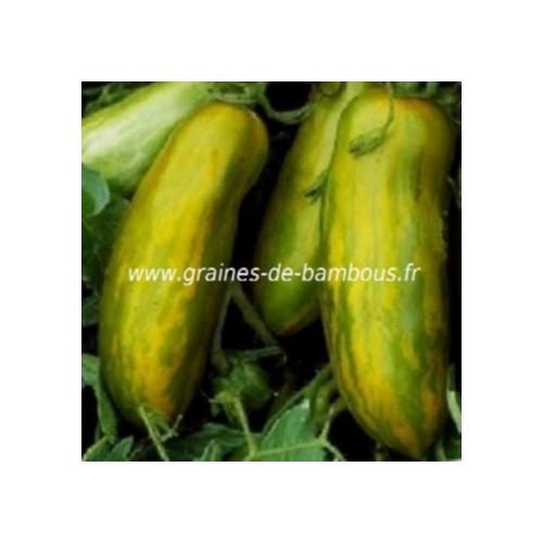 Tomate green sausage sur graines de bambous fr