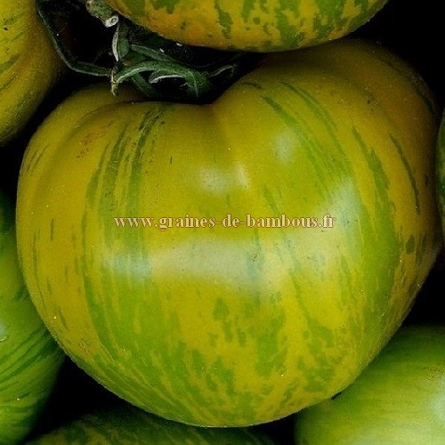 Tomate green zebra semences