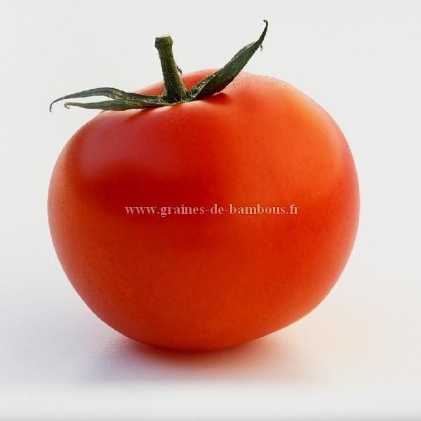 Tomate heinz 1370 graines de bambous fr