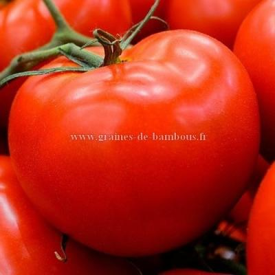 Tomate Heinz 1370 réf.767