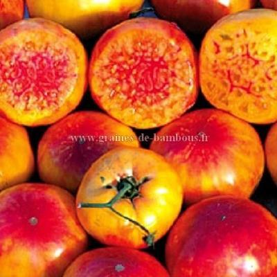 Tomate Hillbilly réf.360