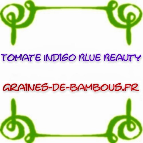 Tomate indigo blue beauty semences
