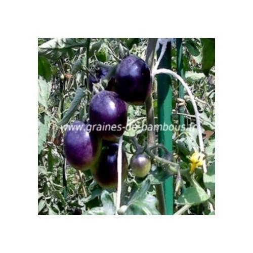 Tomate indigo rose lycopersicum esculentum graines de bambous eu
