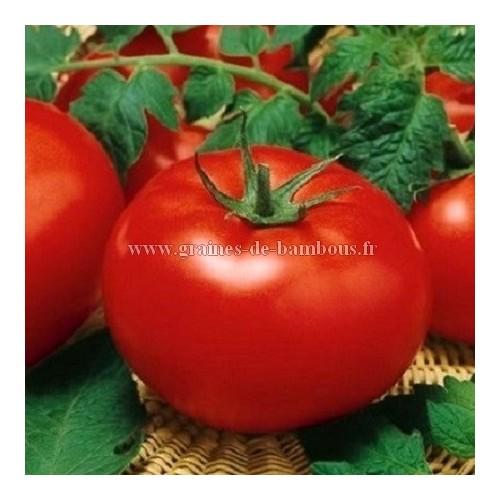 Tomate krakus sur graines de bambous fr