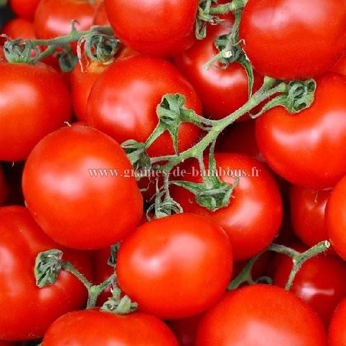 Tomate merveille du jardinier