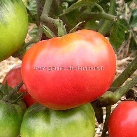 Tomate olena ukrainian graines