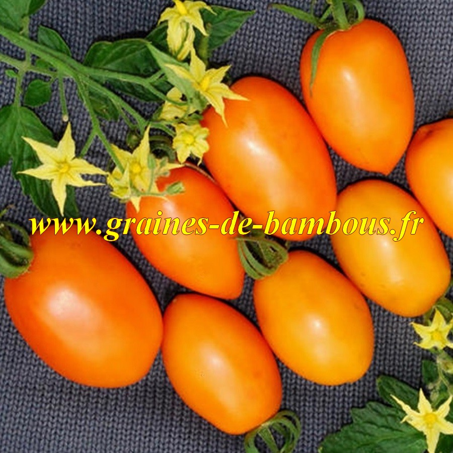 Tomate orange banane lycopersicon esculentum