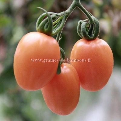 Tomate rose pink Thaï Egg réf.546
