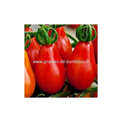 Tomate poire rouge graines de bambous eu