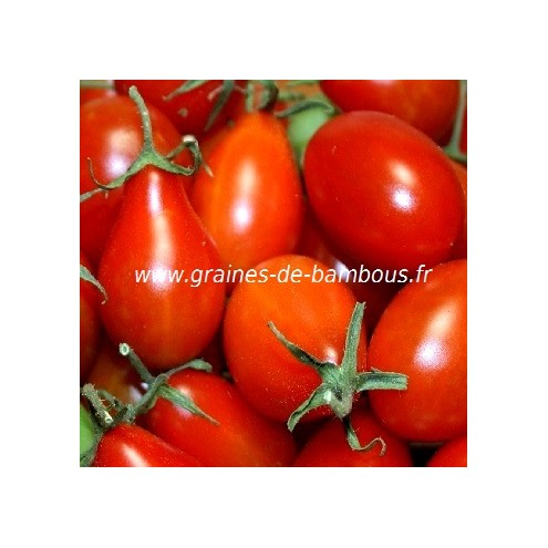 Tomate poire rouge grainesdebambous com